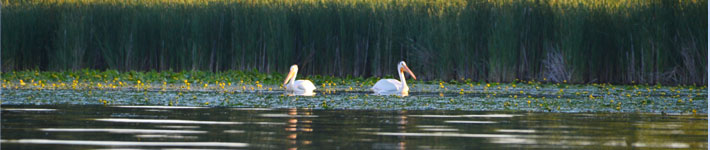 photo of two white birds floating on water
