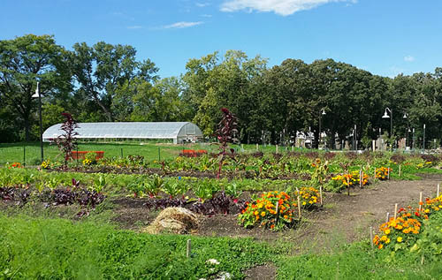 Frogtown Farm, at 5.5 acres, is one of the largest certified organic urban farms in the nation. (Photo courtesy Frogtown Farm)