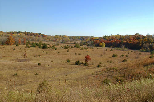 Oak savannah is preserved in the Hastings Sand Coulee Scientific and Natural Area. (Photo courtesy Minnesota Department of Natural Resources)