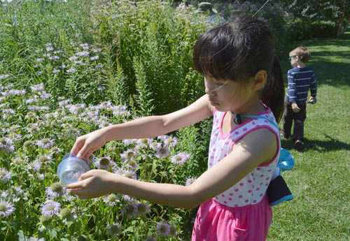 Girl helps with bee survey during a joint Saint Paul Parks & Recreation/University of Minnesota program in the regional parks.
