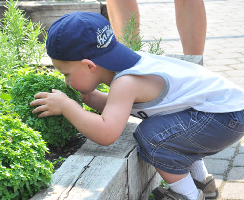 Max Paulson leans into to sniff an oregano plant in the Edible Garden. Max's parents, Heather and Erik Paulson, make a point of bringing Max to the garden every time they visit the zoo.