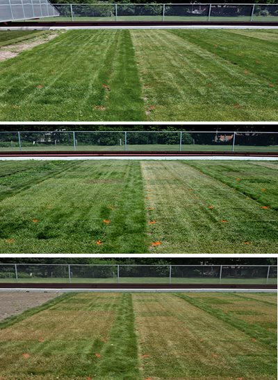 Grass on Day 2 of the drought trial (upper third); same patch on Day 21 (middle); and Day 40 (lower third).