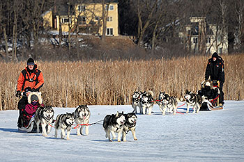 Two teams with sled dogs.