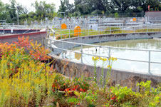 Plant Water Tanks